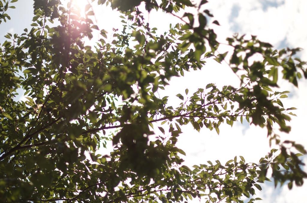 【買った!】AF-S NIKKOR 50mm f/1.4Gの使い心地とは!?感動する写真撮るのってなかなか難しい。。