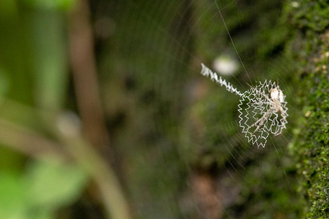 奇妙な蜘蛛の巣