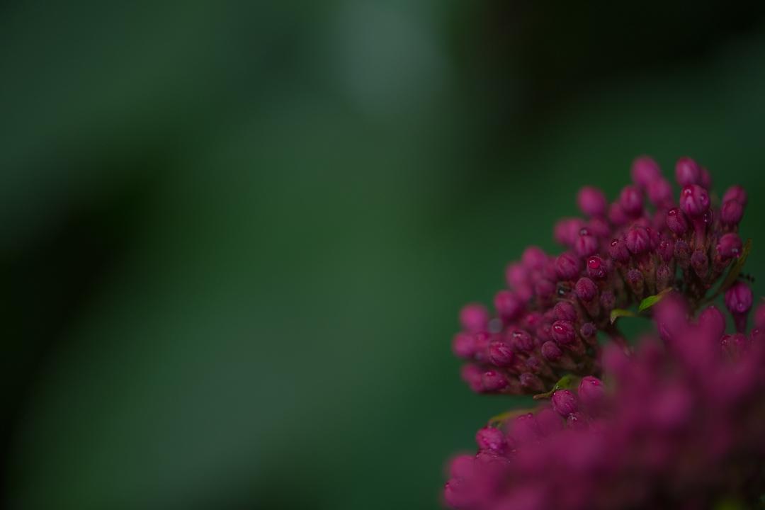 緑の背景と赤い花