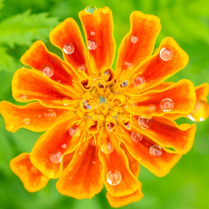 花としずく
