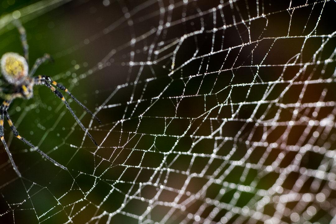 女郎蜘蛛と蜘蛛の巣としずく