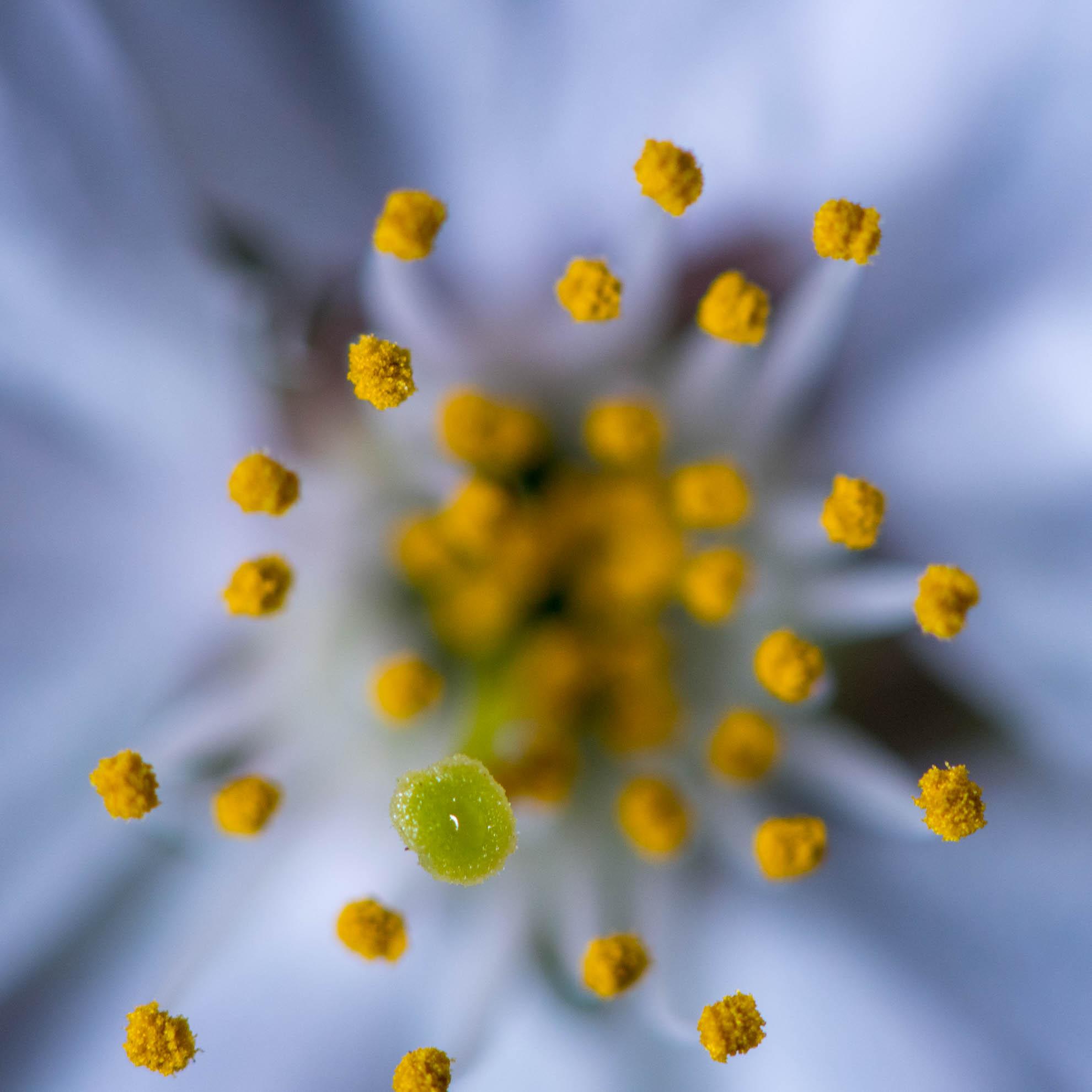 マクロっぽく撮影した花