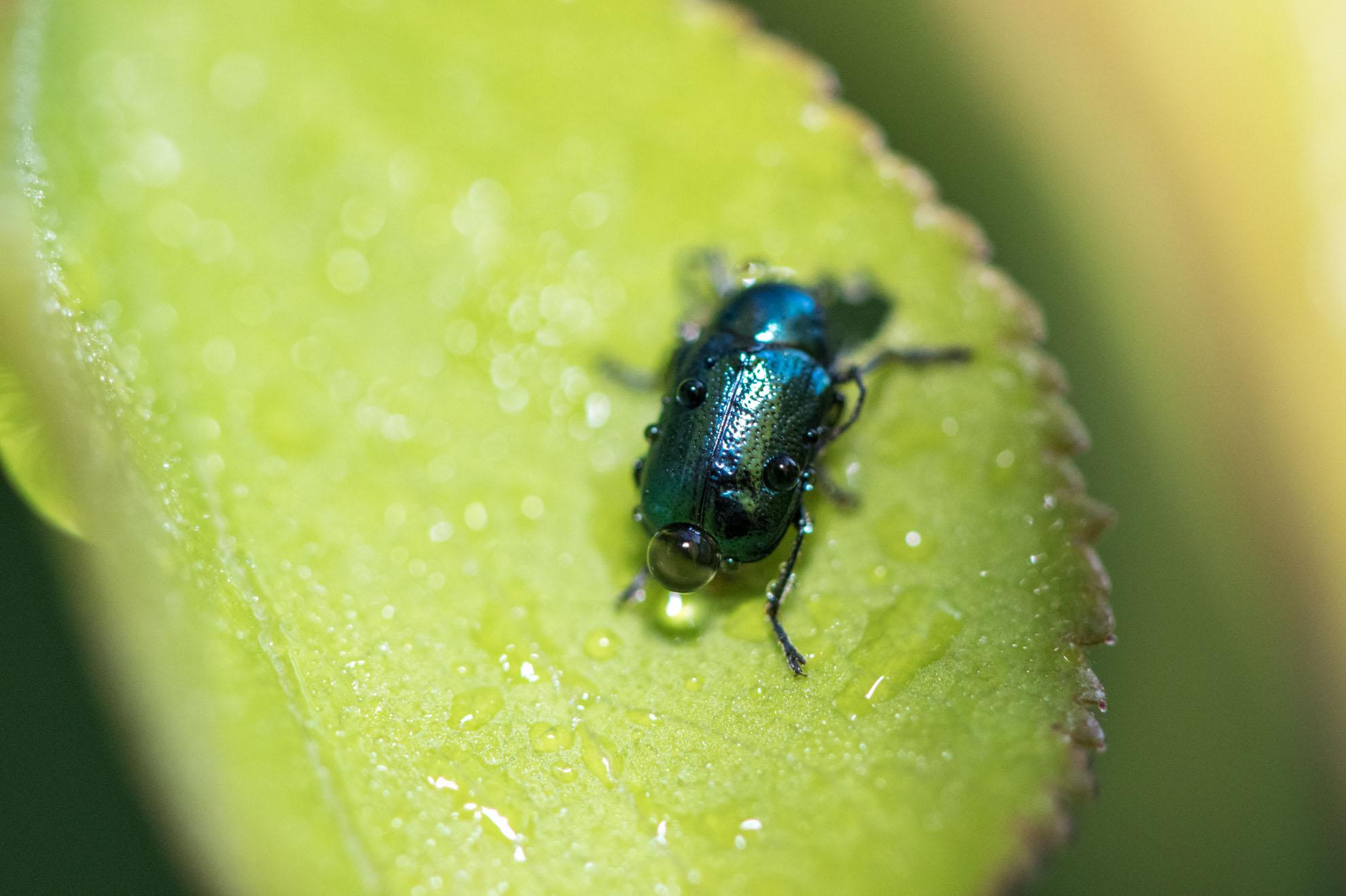 小さな甲虫