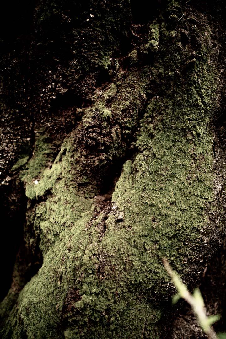木についた苔を